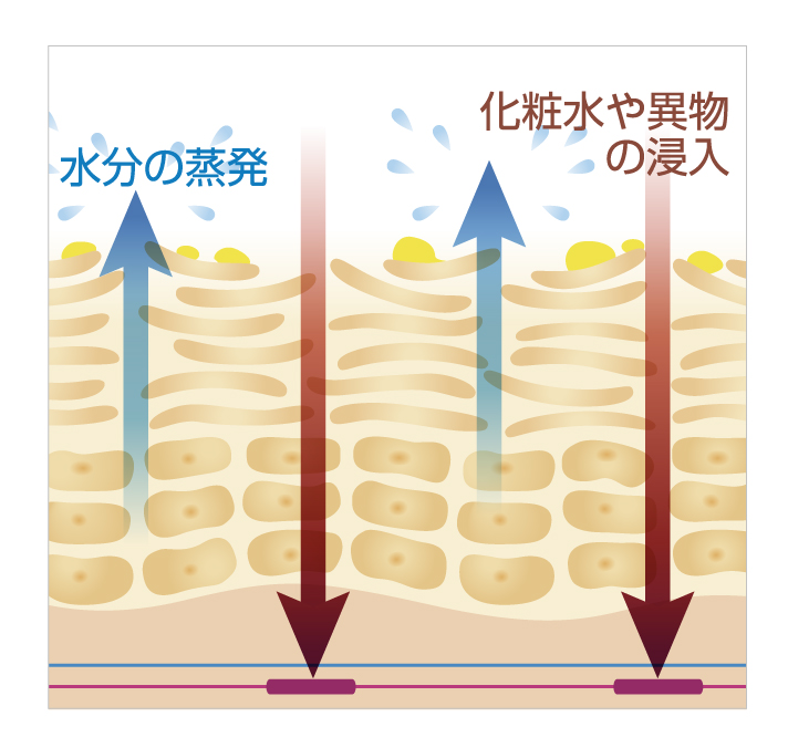 本来は皮膚の内側に溜めている水分と脂分がバリアゾーンの隙間から肌表面に流出