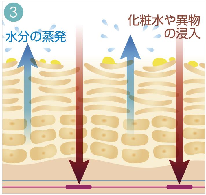 3.化粧品や異物の侵入し水分が蒸発する